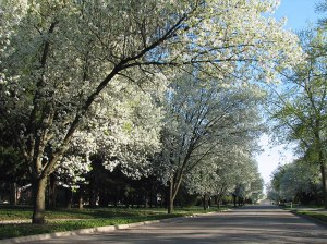 Pear-Tree-Street